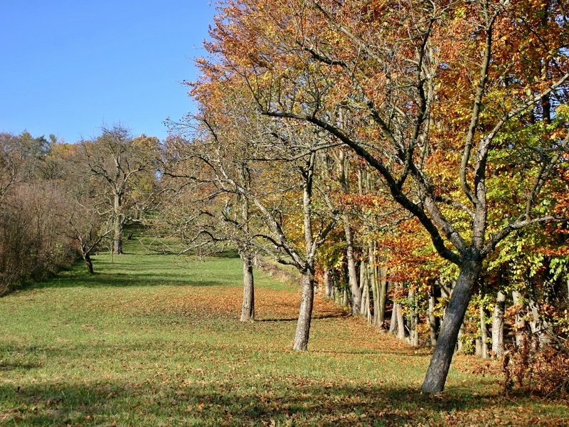 orchard-fall-2015